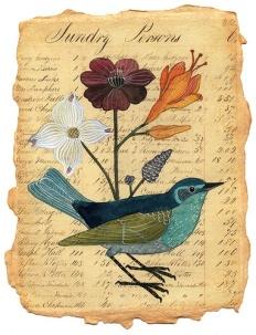 bird sundry