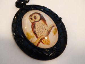 Owl of Oman Blog 1