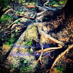 roots_1