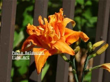 Urban Garden wm 129