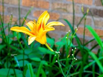 Urban Garden wm 13