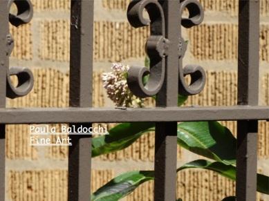 Urban Garden wm 17